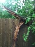 sideways Cedars...